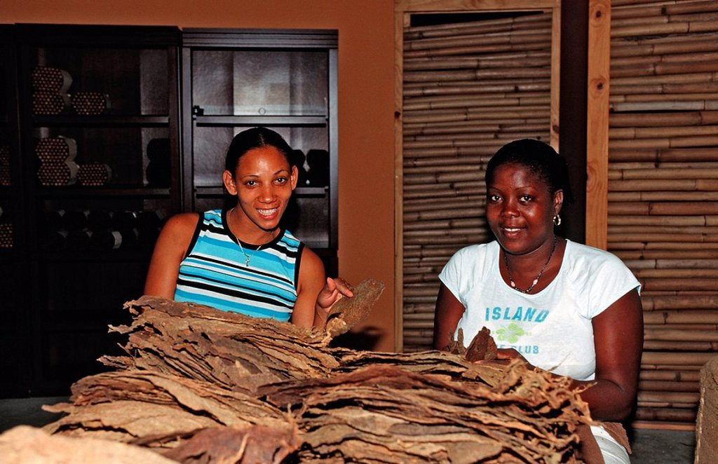 Cigar-production, Punta Cana, Caribbean, Dominican republic : Stock Photo