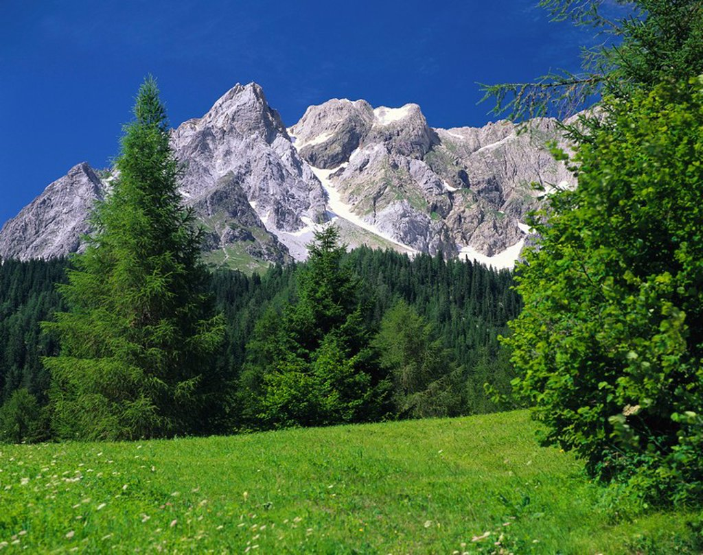 Stock Photo: 1558-141128 Austria, Tyrol, Stanzertal, mountain scenery, summer, meadow, mountain-forest, forest, mountains, mountain, iron-top, nature, deserted, silence, silence, loneliness, habitat,
