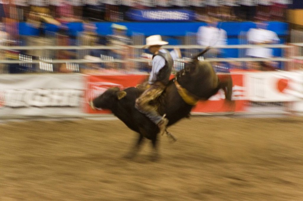 Cowboy, rodeo, Bullriding, : Stock Photo