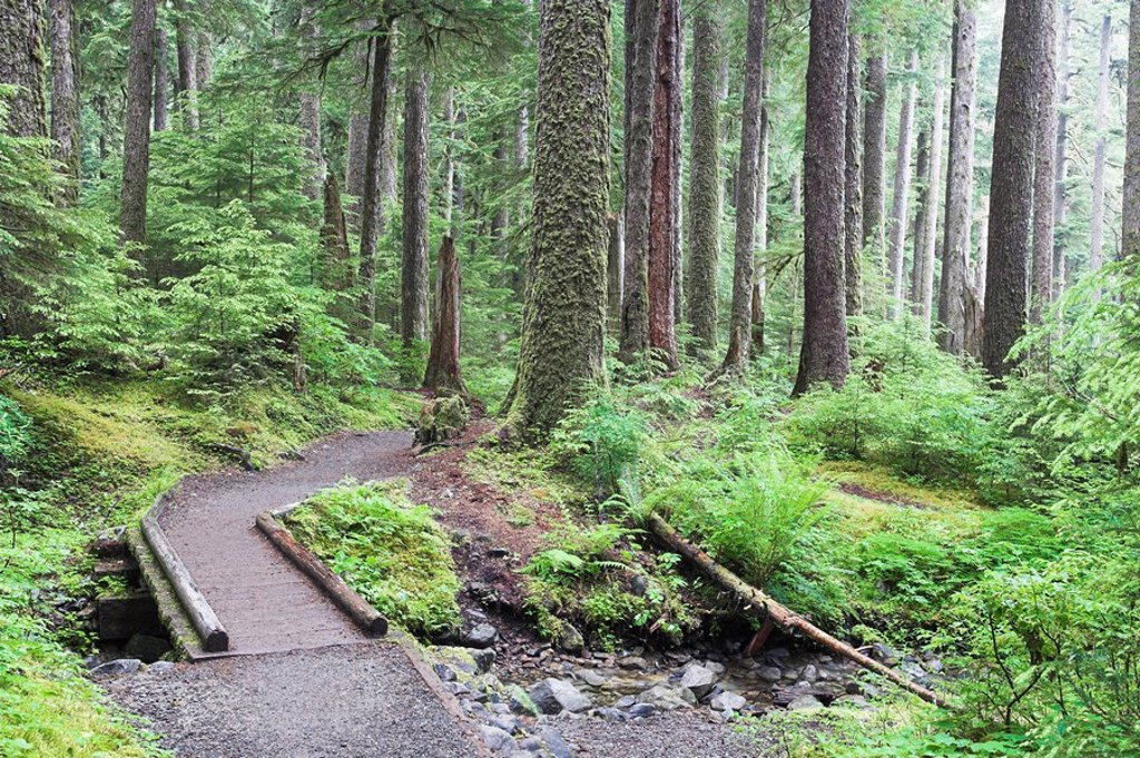 Stock Photo: 1558-145538 usa, Washington, Olympic, national park rain_forest wood_bridge