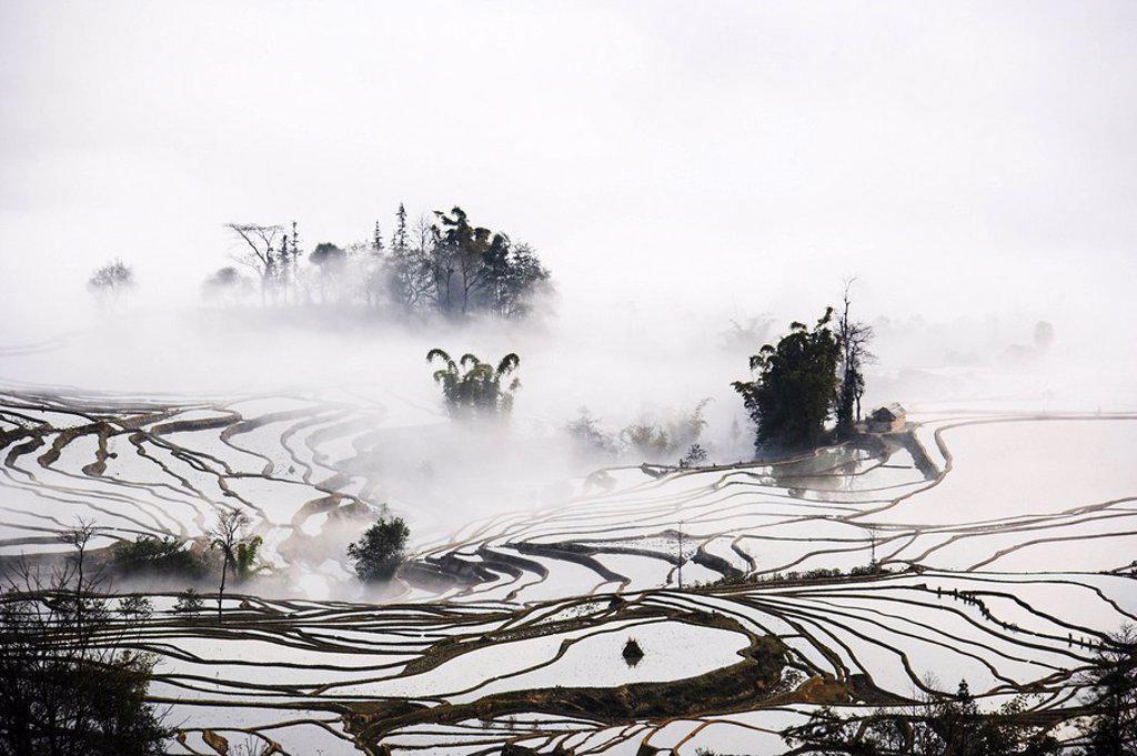 Stock Photo: 1558-145835 Asia, China, rice_terraces, fog, close_up