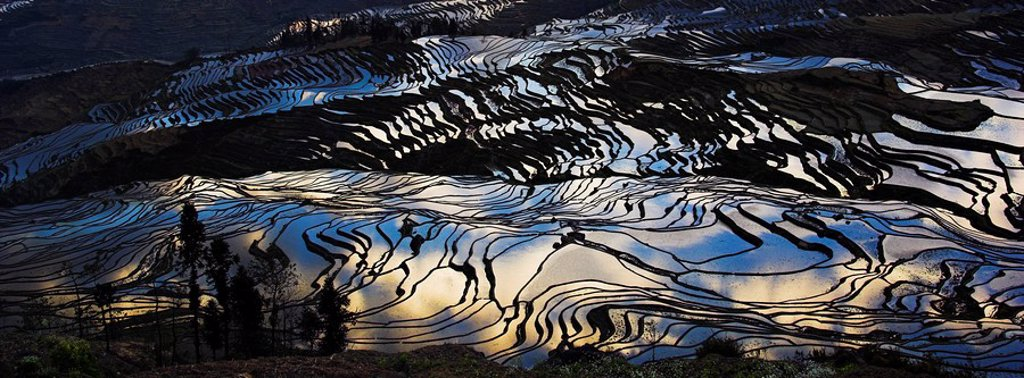 Stock Photo: 1558-145837 Asia, China, rice_terraces, reflects, sunrise, close_up