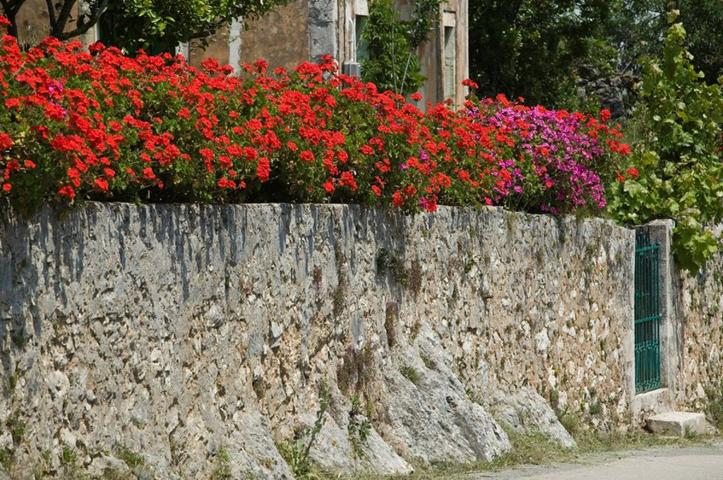 stone_wall, geraniums, house, house_wall, property_wall wall gate flowers flower_splendor, flowerage, red, shining, sunny, outside, summer, ornament_flowers, ornamental_plants, : Stock Photo