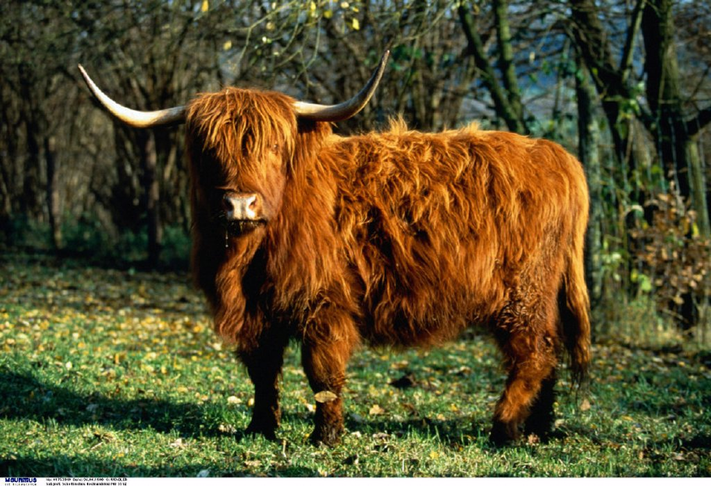 Stock Photo: 1558-157298 Highlander