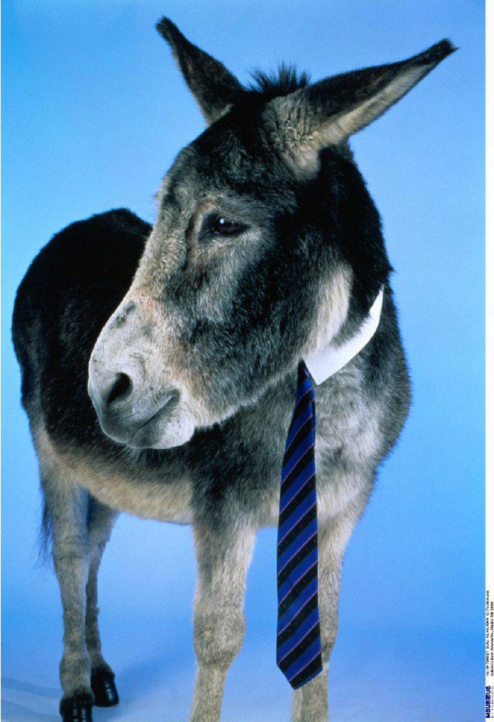 Donkey, Disguise : Stock Photo