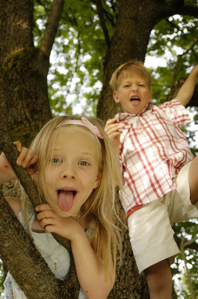 tree, girls, boy : Stock Photo