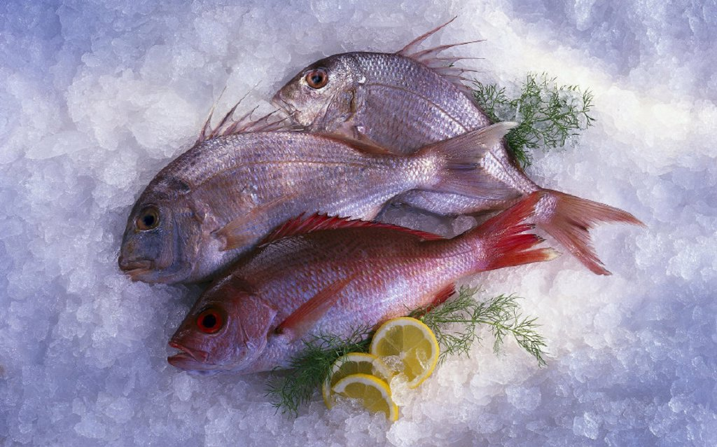 Food fishes, Red Snapper, Sea bream : Stock Photo