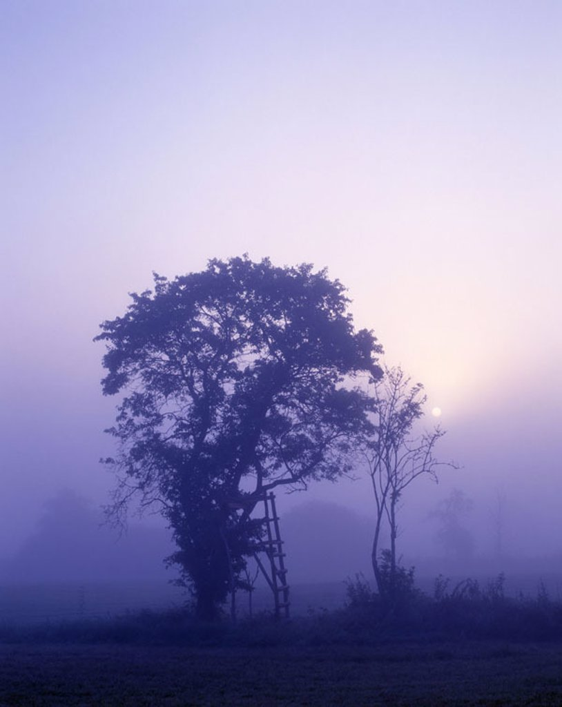 Marshland shaft, tree, silhouette, fogs, dawn  Nature, landscape, swamp, bog, time of day, mornings, twilight, concept, hazy, mystically, immensely, daybreak, twilight, BT : Stock Photo