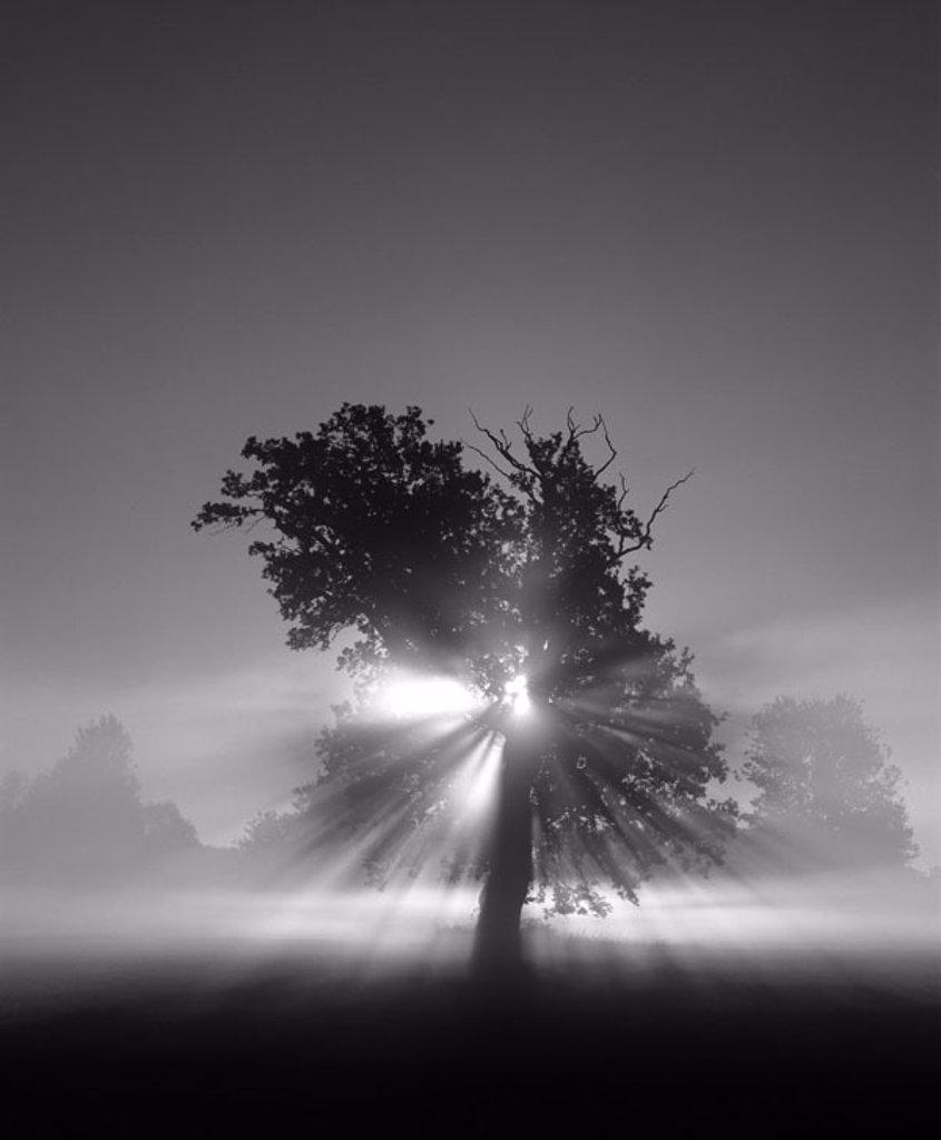 Stock Photo: 1558-66465 Tree, silhouette, back light,  Rays of light, s/w, [M] Series, nature, deciduous tree, twilight, Dämmerlicht, twilight, nature appearance, nature drama, concept, unreal, transcendence, spirituality, inspiration, Spiritualität, BT