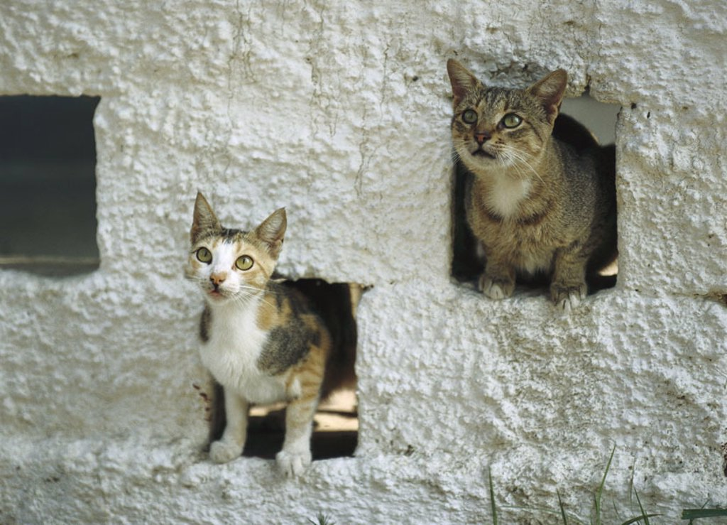 Wall, detail, niche, cats, looks out, portrait  Wall niches, animals, mammals, pets, free-living, house cats, observing, alertly, outside, summer, concept, incoming goods, exits, holes, hiding place, at home, shelter, Durchschlupf, refuge, way out, freedo : Stock Photo