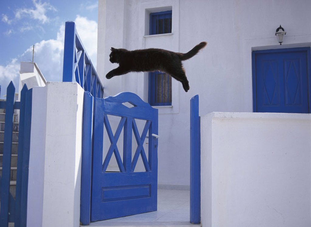 Garden wall, cat, black,  Jump, garden door, side view  Greece, Santorin, house know-blue, fence, animals, mammals, pet, house cat, free-living, movement, mobility, dynamics, jumps, strength, powerfully, on the side, outside, summer, concept, Freigänger, : Stock Photo