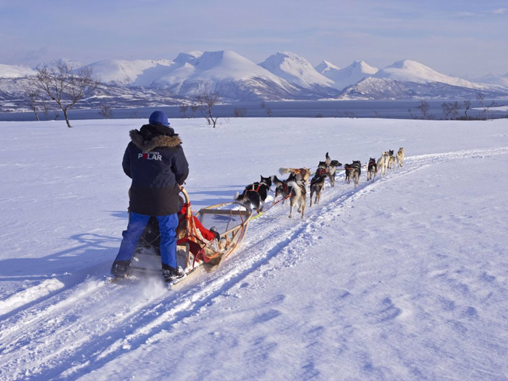 Winter landscape, snow surface, man,  Dog sleighs, drives, view from behind  Europe, Scandinavia, Norway, North Norway, Troms, Tromso, season, winters, snow, sport, winter sport, dog sport, sleighs, sleigh dogs, dogs, running, running, pulls, sled, backgr : Stock Photo
