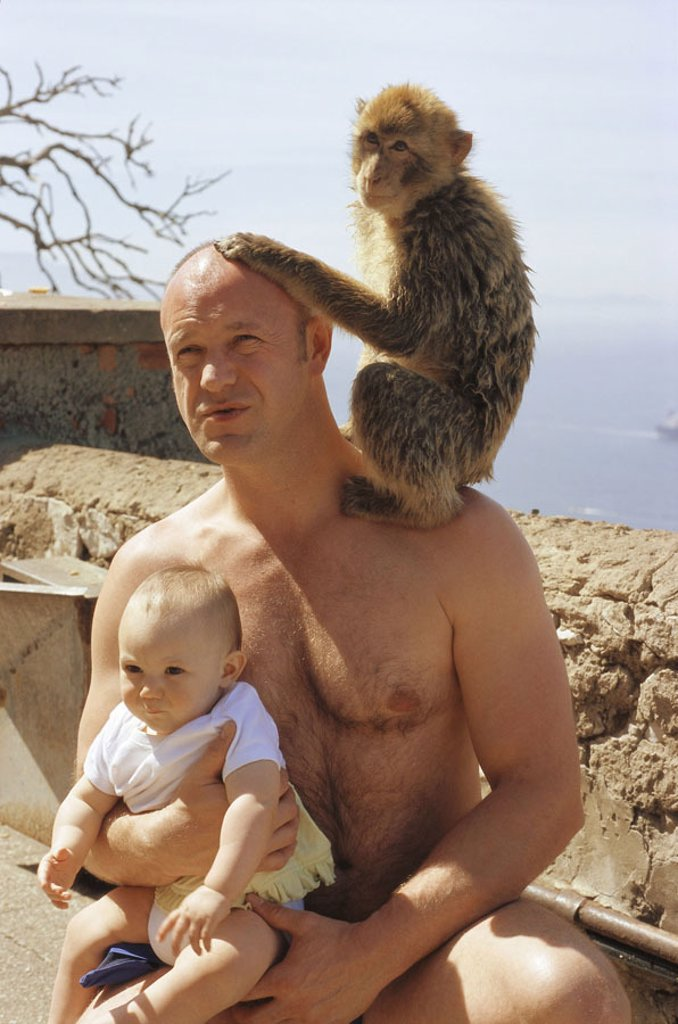 Gibraltar, Upper skirt Nature reserve,  Berber monkey, Macaca sylvanus, man,  Shoulder, sitting, baby, holding, no mr! Europe, Iberian peninsula, law lime rocks, lime rocks, Englische Kronkolonie, nature preserve, animal, mammal, monkey, Makake, Makakenaf : Stock Photo