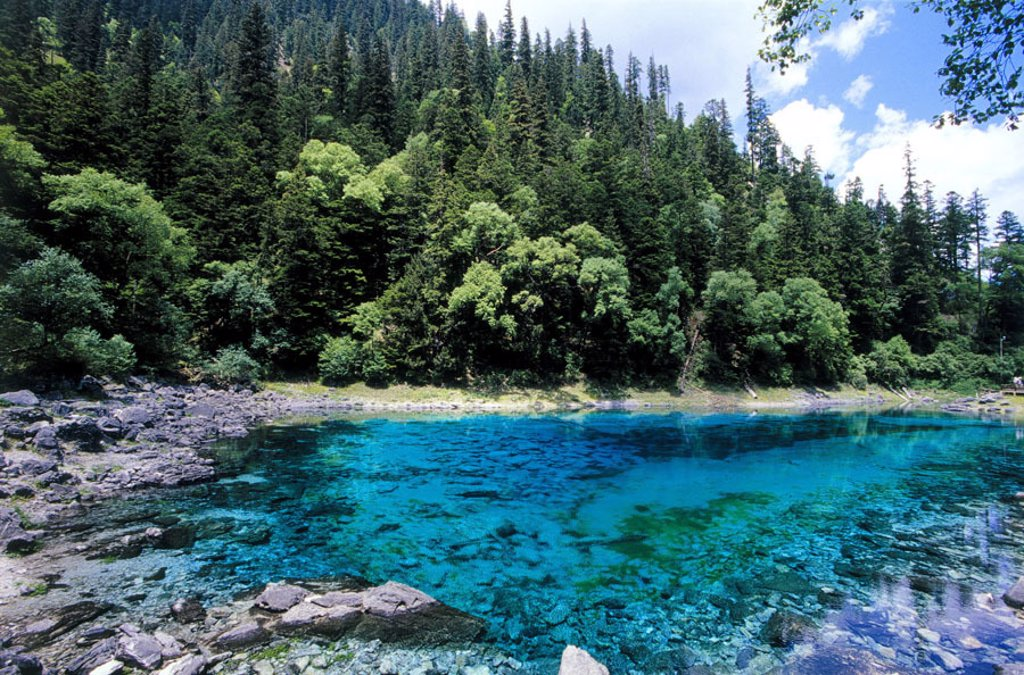 China, province Sichuan, Jiuzhaigou,  Five colored sea  Asia, Eastern Asia, central China, Neun-Dörfer-Tal, sight, UNESCO-Weltnaturerbe, nature, landscape, forest, five colors sea water blue, turquoise : Stock Photo