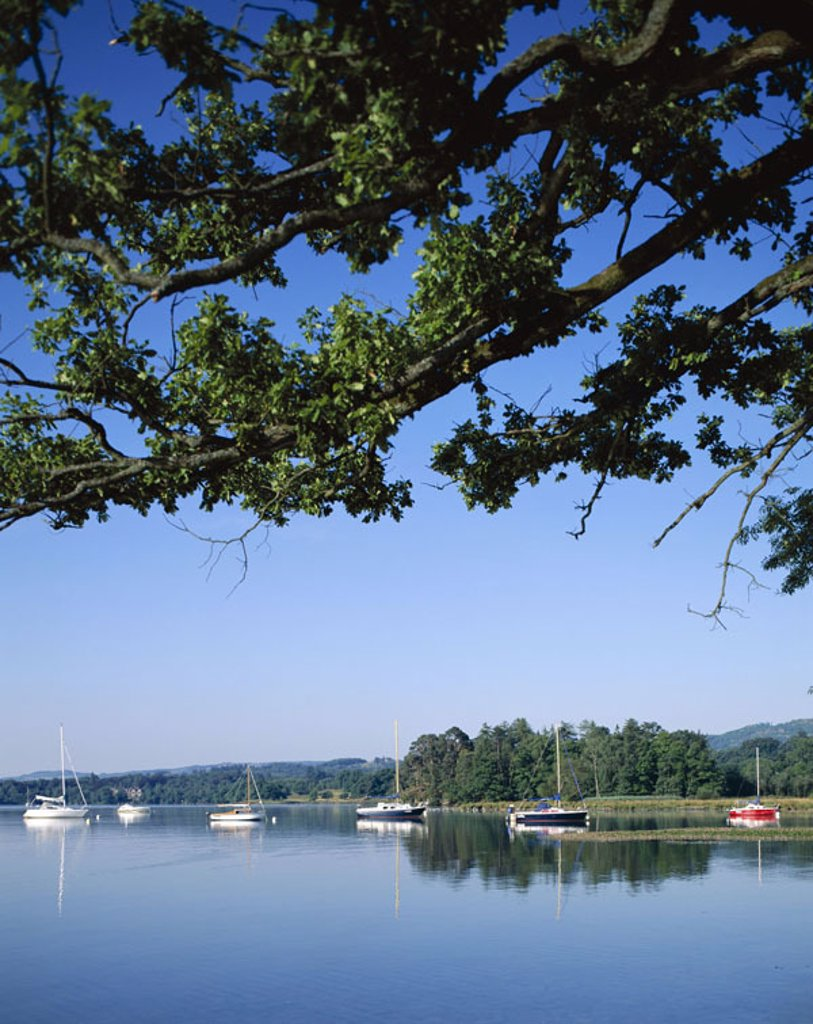 Great Britain, England, Cumbria,  Brine District, Windermere brine,  Boats, anchoring  Europe, island, landscape, nature, sea, mountains, hills, Windermere-See, water, quietly, quiet, windless, sailboats, tree, branch, sailing, silence, silence, lonelines : Stock Photo