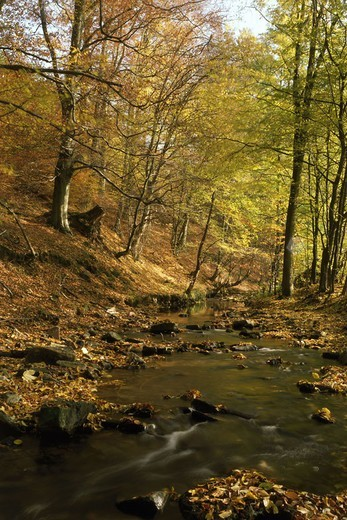 Landscape, forest, brook, stones,  Fall foliage  Nature, trees, deciduous trees, deciduous forest, season, autumn, autumnal, vegetation, botany, plants, forest brook, water, flows, rocks, concept, idylls, naturalness, untouched, habitat, ecology, autumn c : Stock Photo