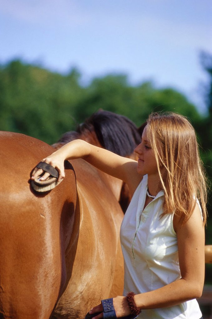 Stock Photo: 1558-84604 Woman, young, horse, detail, cleans   Teenager, 20-30 years, blond, horsewoman, horse proprietress, leisure time, riding, care, animal care, horse care, fur care, cleaning, grooms, currycombs, brush, Kardätsche, brush outside, on the side, hobby