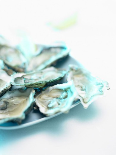 Plates, oysters, detail, opened,    Food, Seafood, seafood, crustaceans, mussels, Ostreidae, newly, raw, living, appetizer, delicacy,  Specialty, concept, pleasure, luxury, wealth, luxury lives, hedonism, quietly life, fact reception, : Stock Photo