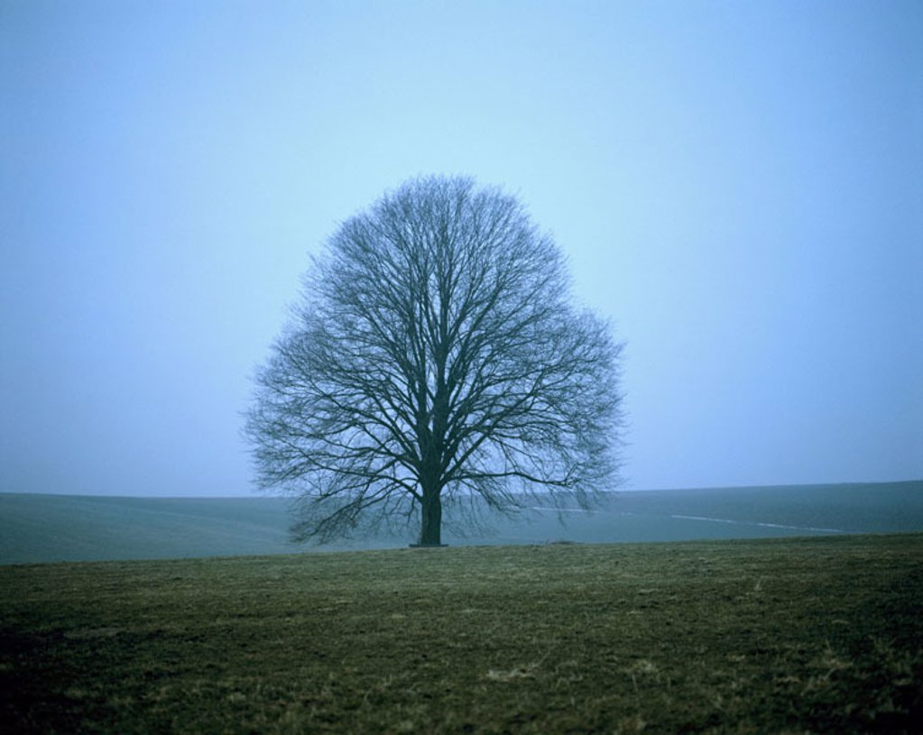 Tree, elm, bald, meadows, fields,  Fogs,   Series, nature, season, winters, March, deciduous tree, solitaire tree, individual, detached, changes, change, heaven, hazy, covers, : Stock Photo