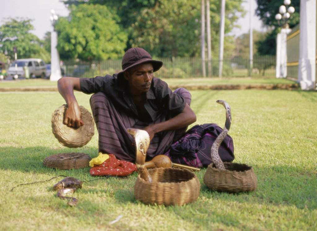 Island Sri Lanka, Schlangenbeschwörer,  Indian cobras,   Asia, South Asia, culture, man, Gaukler, animals, reptiles, snakes, poisonous snakes, poison adders, glasses snakes, venomously, snake entreaty entreaty presentation, conversation, tradition, basket : Stock Photo