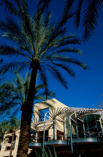 Low angle view of palm trees in front of a building, Arizona Center, Phoenix, Arizona, USA : Stock Photo