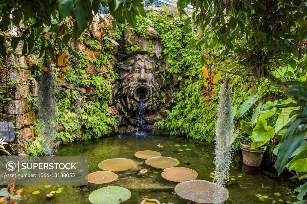 Stock Photo: 1566-13138055 Italy, Campania, Forio. Ischia Island - La Mortella, The Victoria Amazonica