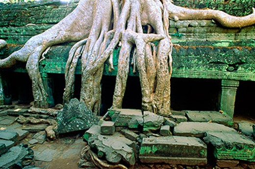 Stock Photo: 1566-0105660 Ta Prohm temple, complex of Angkor Wat. Angkor. Cambodia