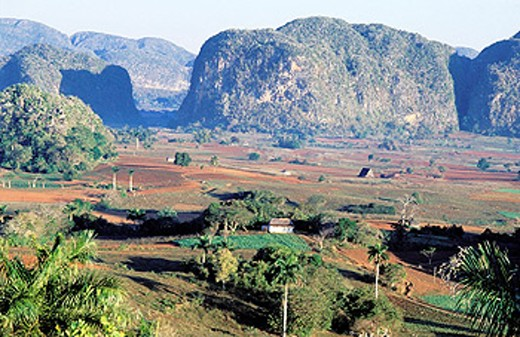 Viñales Valley. Cuba : Stock Photo