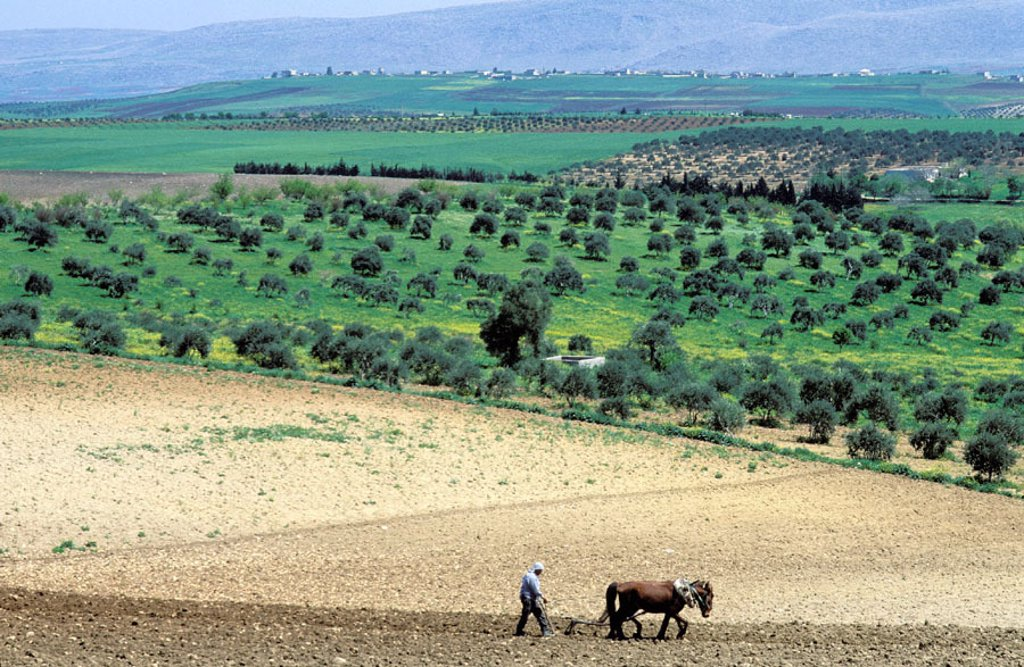 Stock Photo: 1566-0106070 Country landscape near Aleppo. Syria