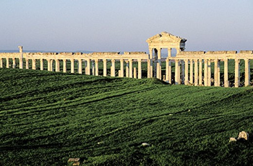 Ruins of colonnade. Apamea. Syria : Stock Photo