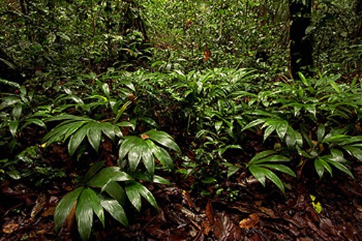 Stock Photo: 1566-0107781 Amazon Forest. Peru