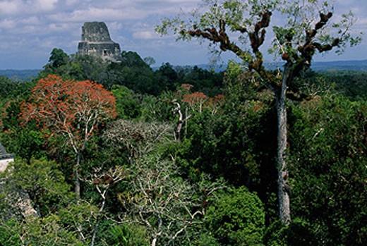 Temple IV. Mayan ruins of Tikal. Guatemala : Stock Photo