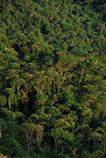 Amazon Forest. Venezuela : Stock Photo
