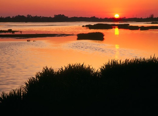Doñana National Park. Huelva province. Spain : Stock Photo