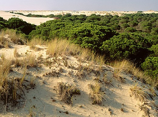 Doñana National Park. Huelva province. Andalucia, Spain : Stock Photo