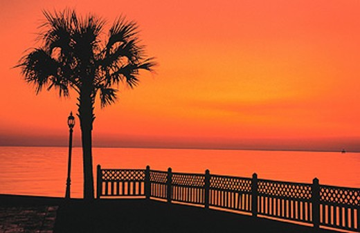 Palm tree. Grand Hotel. Mobile Bay. Point Clear. Alabama. USA : Stock Photo