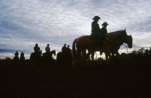 Stock Photo: 1566-0123995 Horses warmed up at dawn. Tucson. Arizona. USA