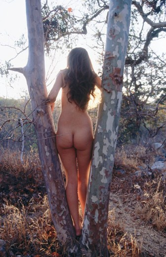 Nude in a forest. California. USA. : Stock Photo