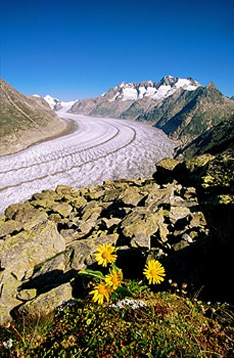 Aletsch Glacier. Switzerland : Stock Photo