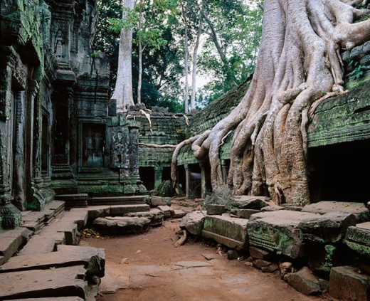 Ta Prohm Temple in Angkor. Cambodia : Stock Photo