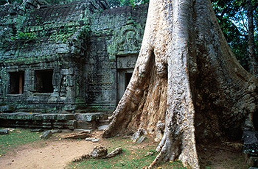 Stock Photo: 1566-0131206 Ta Prohm Temple in Angkor. Siem Reap. Cambodia
