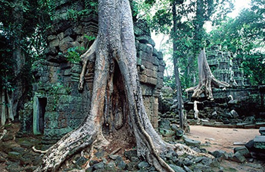 Ta Prohm Temple in Angkor Wat complex. Siem Reap. Angkor. : Stock Photo