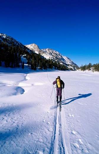 John Muir Wilderness. Skier crossing a snowy meadow in the Little Lakes Valley. Inyo National Forest. California. USA : Stock Photo