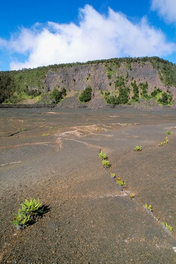 Stock Photo: 1566-0132939 Ferns emerging from cracks in the crater surface along the Kilauea Iki Trail. Hawaii Volcanoes National Park. The Big Island. Hawaii. USA