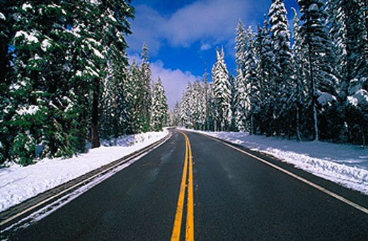 Snow on pines along highway. Crater Lake NP. Oregon. USA : Stock Photo