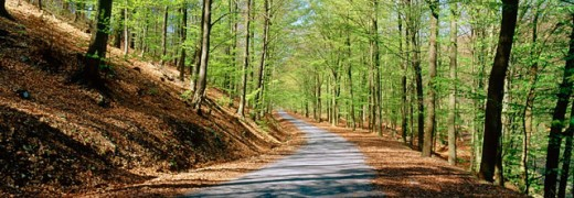 Stock Photo: 1566-0137984 Beech forest, road, springtime. Ardennes. Belgium