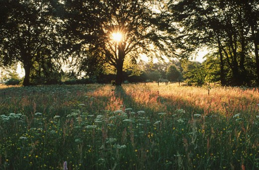 Stock Photo: 1566-0138461 Meadow at sunset. Ardennes, Belgium