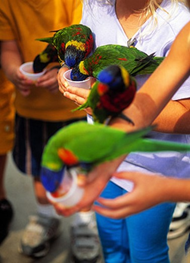 Children with birds : Stock Photo