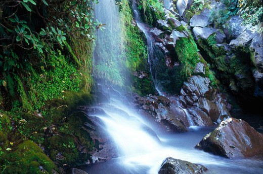 Stream and moss-covered rocks. Egmont National Park. North Island. New Zealand : Stock Photo