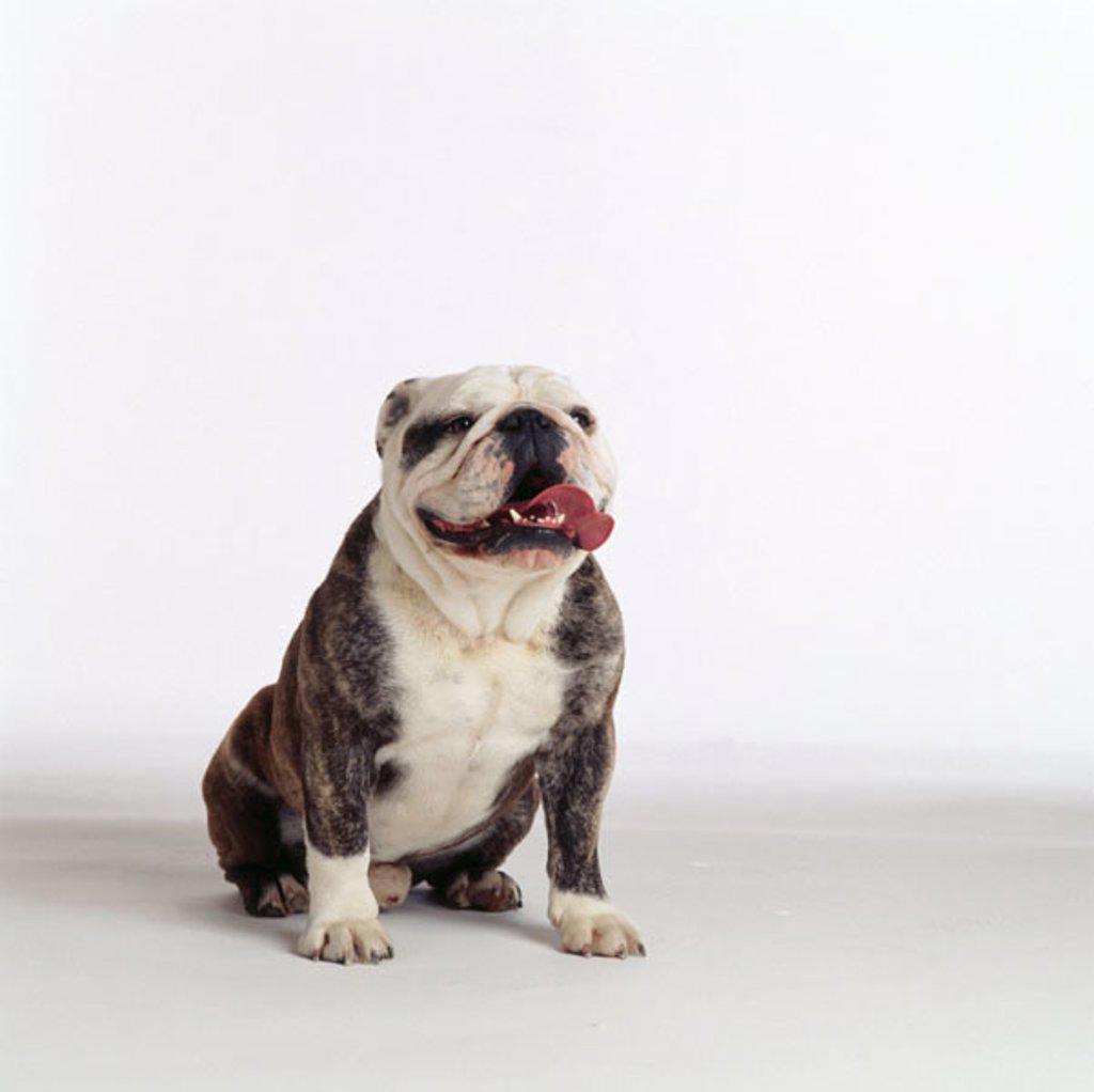 Stock Photo: 1566-0142325 Animal